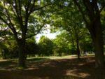 世田谷の砧公園そばのOKと砧公園散策