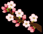 千鳥ヶ淵夜の桜の動画です