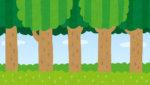 森林浴はリラックス効果がある??