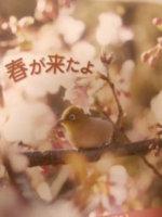 逗子広報に載っていた逗子市桜が見れる箇所!