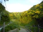 横須賀・久留和の奥にある関根川親水施設の遊歩道を歩きました!