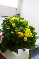 菜の花いただきました!