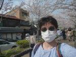 鎌倉のだんかづらを歩いてきました、桜を見てきました。