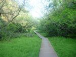 鎌倉広町緑地を歩いてきました。